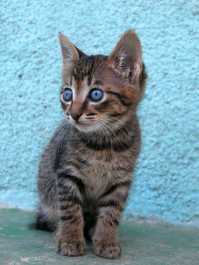 Download γατάκι στοκ εικόνες. εικόνα από κάθετος, πορτρέτο, τιγρέ - 375740
