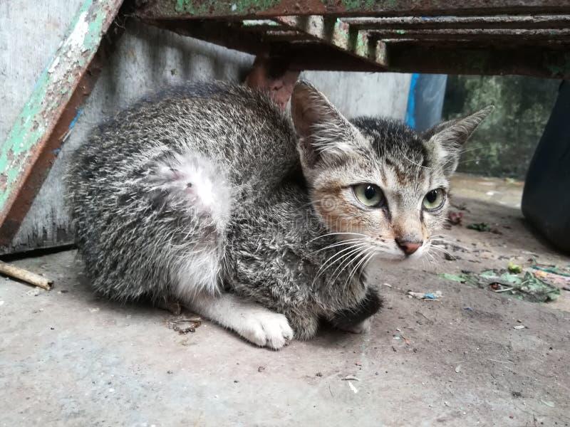 Γατάκι cutie στοκ εικόνες