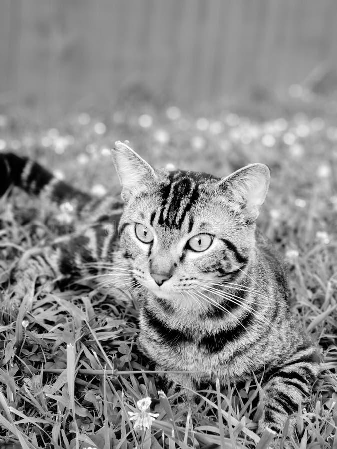 Γατάκι MoeMoe που κρεμά έξω στοκ φωτογραφίες με δικαίωμα ελεύθερης χρήσης
