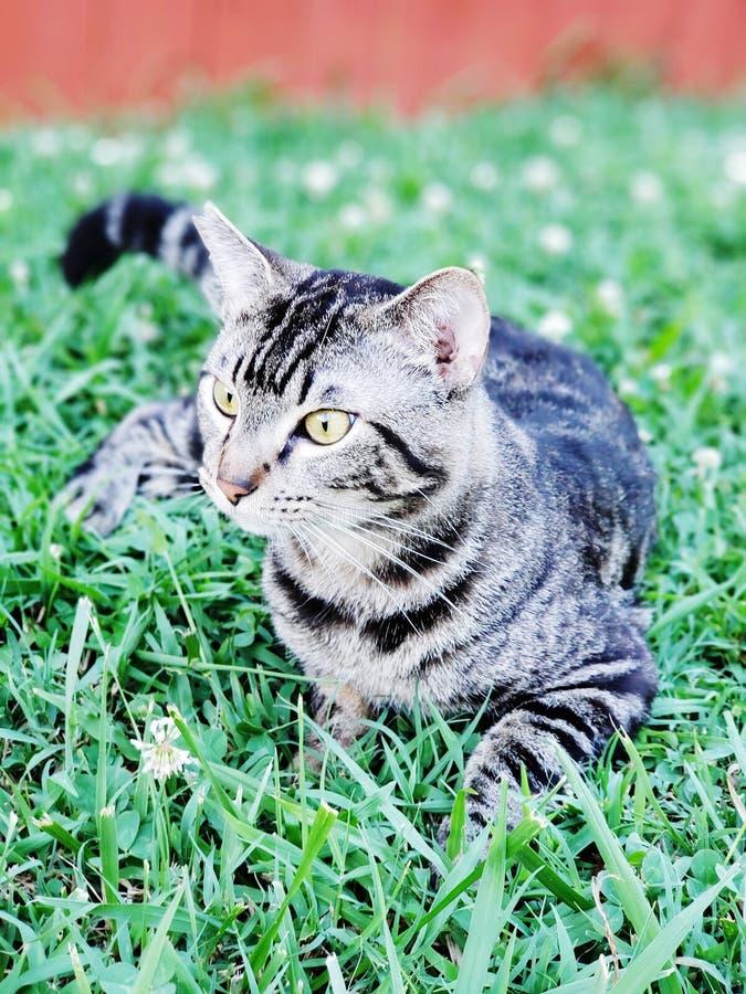 Γατάκι MoeMoe που κρεμά έξω στοκ εικόνα