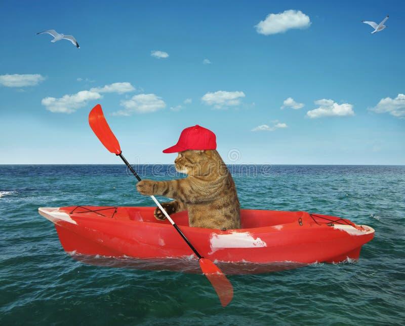 Γατών στη θάλασσα στοκ φωτογραφία με δικαίωμα ελεύθερης χρήσης