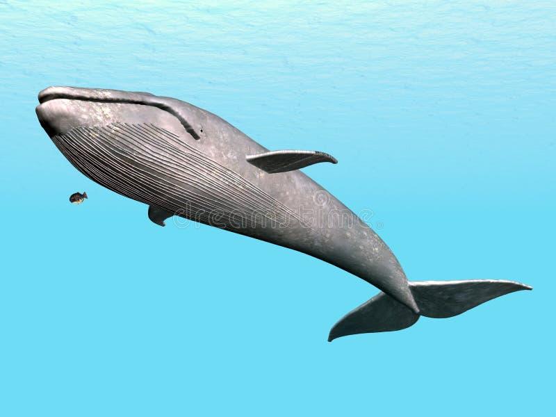 Γαλάζια φάλαινα διανυσματική απεικόνιση