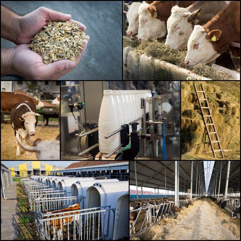 Γαλακτοκομική βιομηχανία στοκ εικόνα