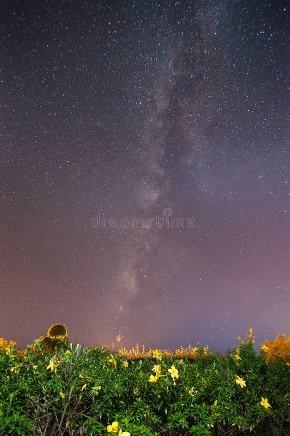 Γαλακτώδης τρόπος πέρα από τον κήπο λουλουδιών Allamanda (περιέχετε το θόρυβο και την κίνηση στοκ φωτογραφίες