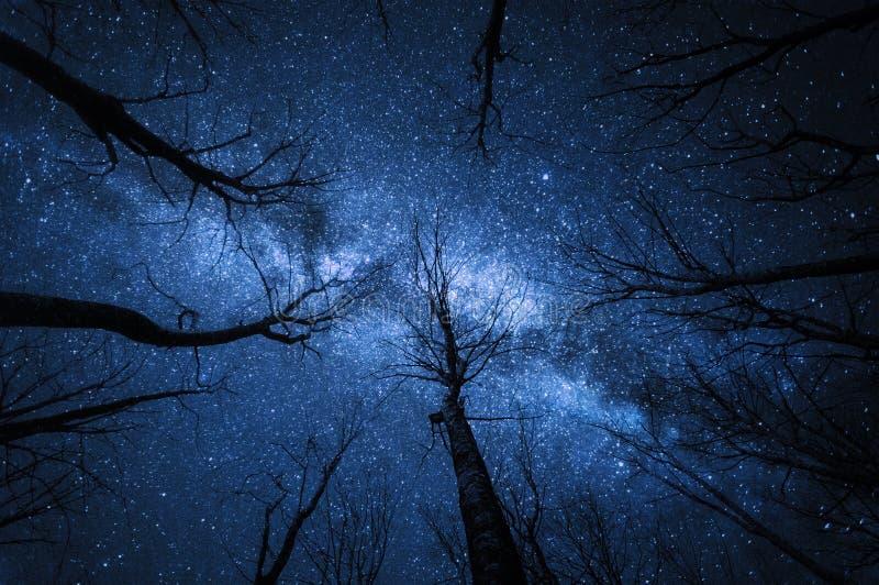 Γαλακτώδης τρόπος στο δάσος στην έναστρη νύχτα στοκ φωτογραφία