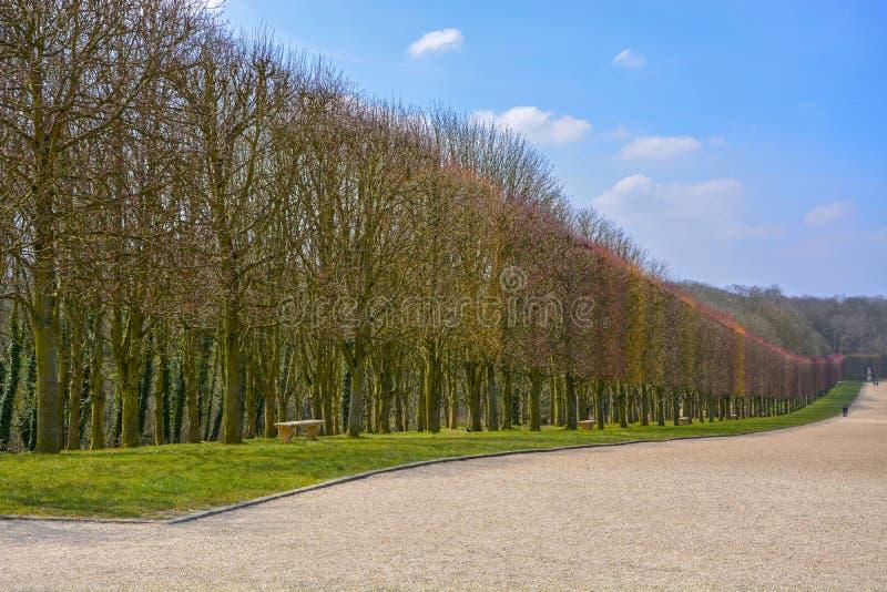 Γαλλικά κόκκινα πιό espalier δέντρα ύφους στοκ φωτογραφίες με δικαίωμα ελεύθερης χρήσης