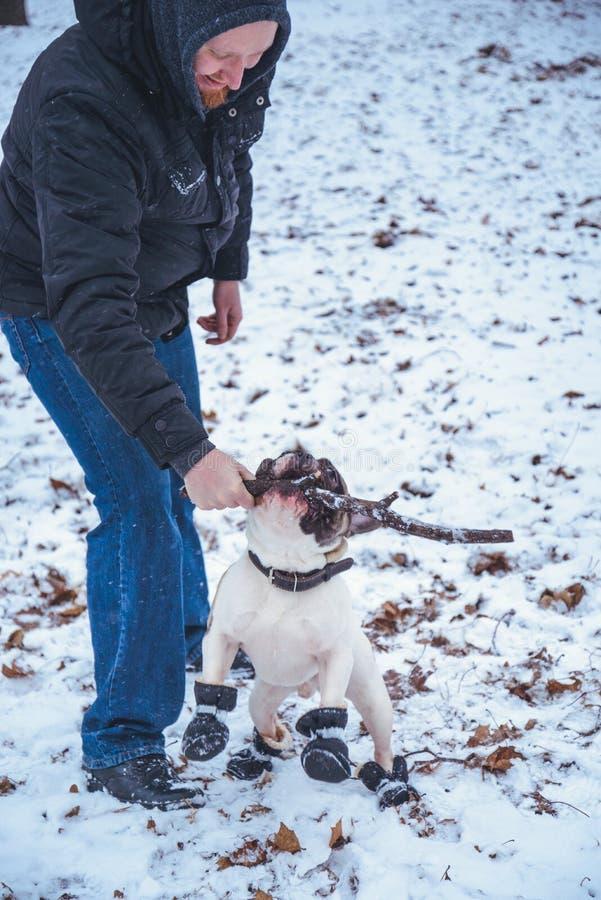 Γαλλικό σκυλί μπουλντόγκ playingin ο χειμώνας με το άτομο στοκ εικόνα