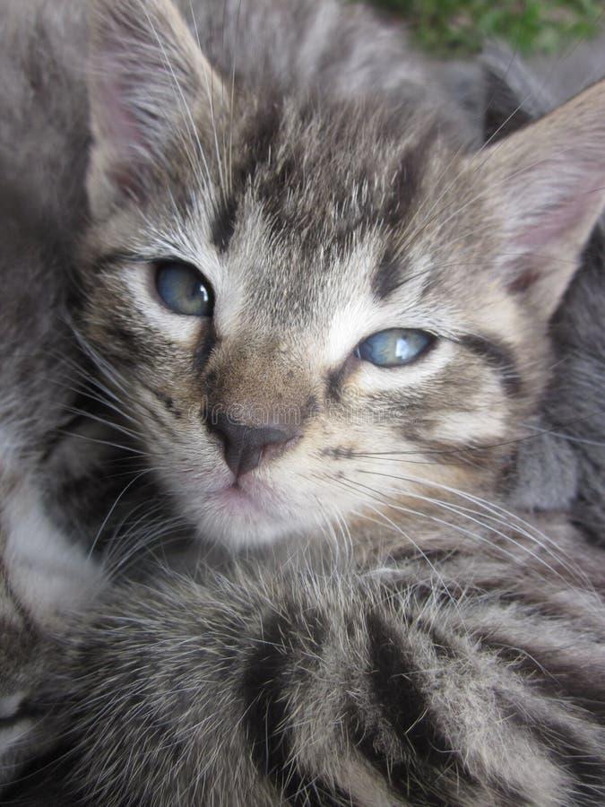 Γδυμένο τίγρη γατάκι στοκ εικόνα με δικαίωμα ελεύθερης χρήσης