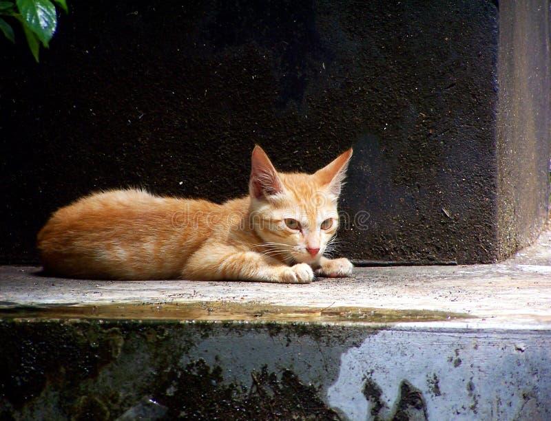 γειά σου γατάκι στοκ εικόνα