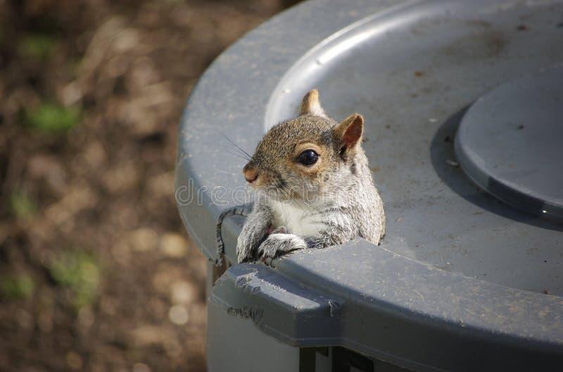 γειά σου σκίουρος στοκ φωτογραφία με δικαίωμα ελεύθερης χρήσης