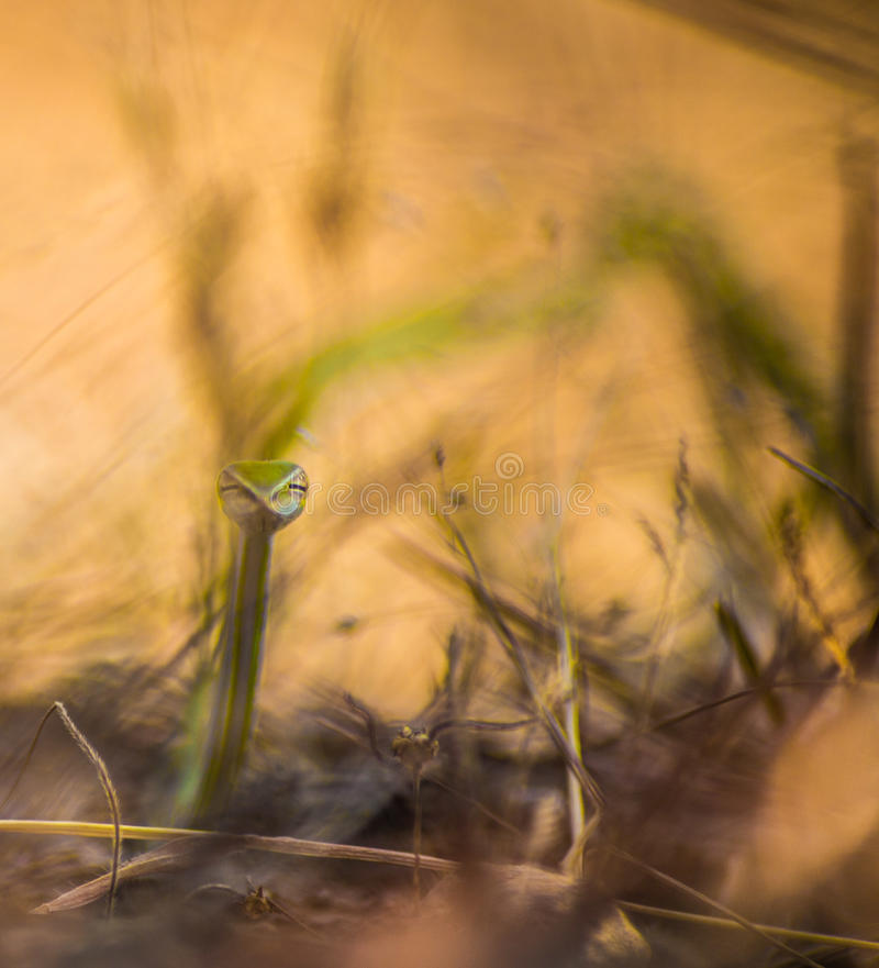 Γειά σου φίδι στοκ εικόνα με δικαίωμα ελεύθερης χρήσης