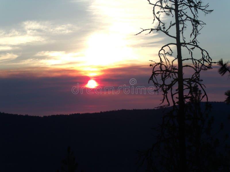 γεμισμένος καπνός ουραν&omi στοκ φωτογραφία