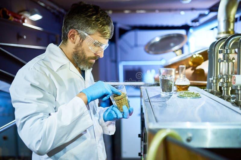 Γενειοφόρος ζυθοποιός που πραγματοποιεί το πείραμα στοκ εικόνες με δικαίωμα ελεύθερης χρήσης