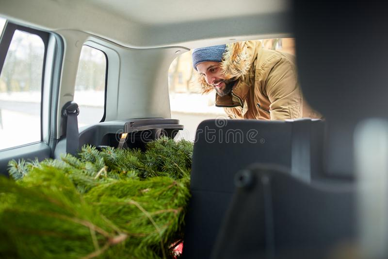 Γενειοφόρο χριστουγεννιάτικο δέντρο φόρτωσης ατόμων στον κορμό του αυτοκινήτου του, εσωτερική άποψη Το Hipster βάζει το δέντρο έλ στοκ εικόνες
