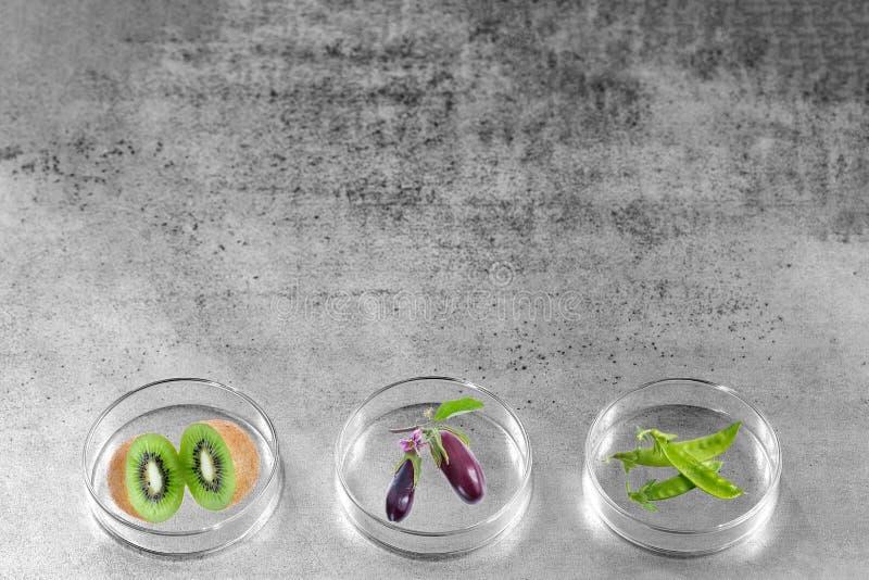 Γενετικά τροποποιημένος, φρούτα, λαχανικό, που εξετάζεται petri στο πιάτο στοκ εικόνα