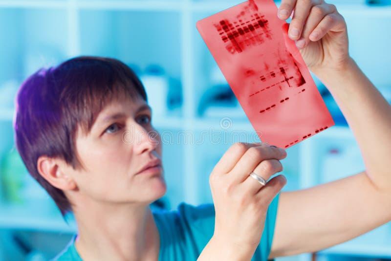 Γενετική δακτυλοσκοπία χρωματογραφίας στοκ εικόνες με δικαίωμα ελεύθερης χρήσης