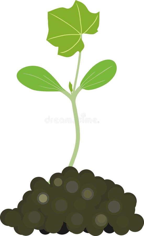 Γενική άποψη του νεαρού βλαστού κολοκυθιών με τα πράσινα φύλλα και το χώμα ελεύθερη απεικόνιση δικαιώματος