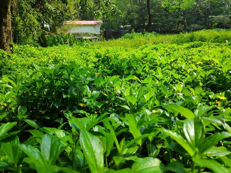 Γενναιόδωρος πράσινος στοκ φωτογραφία με δικαίωμα ελεύθερης χρήσης