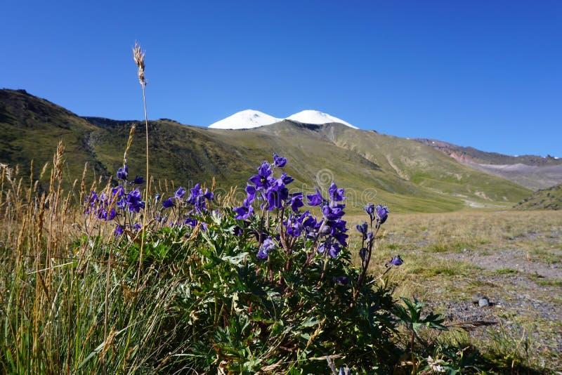 Γεράνι βουνών στοκ φωτογραφία με δικαίωμα ελεύθερης χρήσης