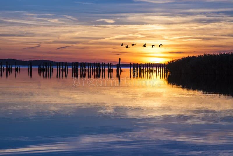 Γερανοί που πετούν πέρα από το groyne στη λιμνοθάλασσα στο ηλιοβασίλεμα στοκ εικόνα
