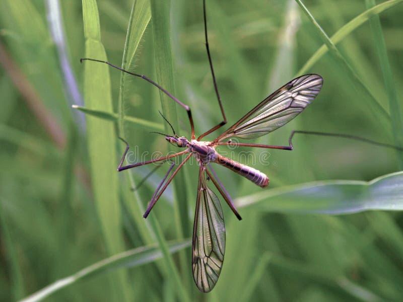 Γερανός-μύγα στοκ εικόνα με δικαίωμα ελεύθερης χρήσης