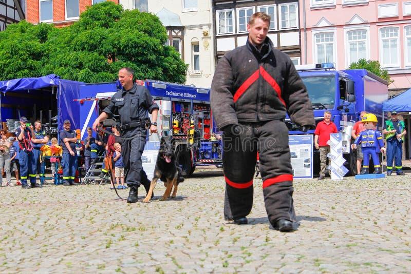 Γερμανικός χειριστής σκυλιών αστυνομίας με ένα τσοπανόσκυλο αστυνομίας στοκ εικόνες