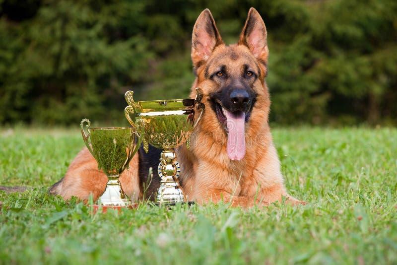 γερμανικό τσοπανόσκυλο στοκ εικόνα