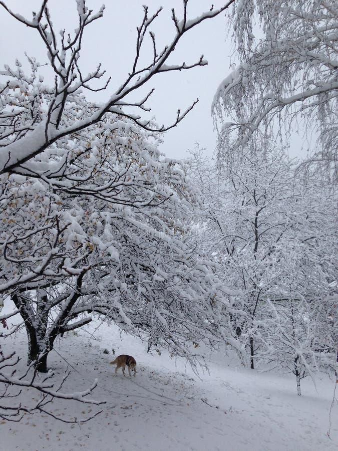 Γεροδεμένο παιχνίδι στο χιόνι στοκ εικόνες