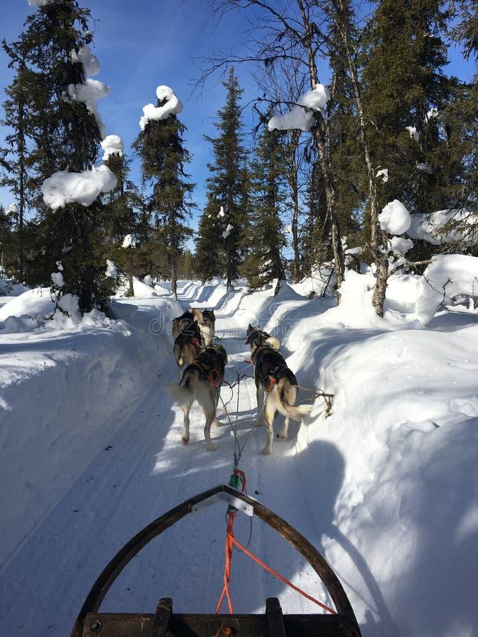 Γεροδεμένο σαφάρι στο φινλανδικό Lapland, Kittila στοκ εικόνα