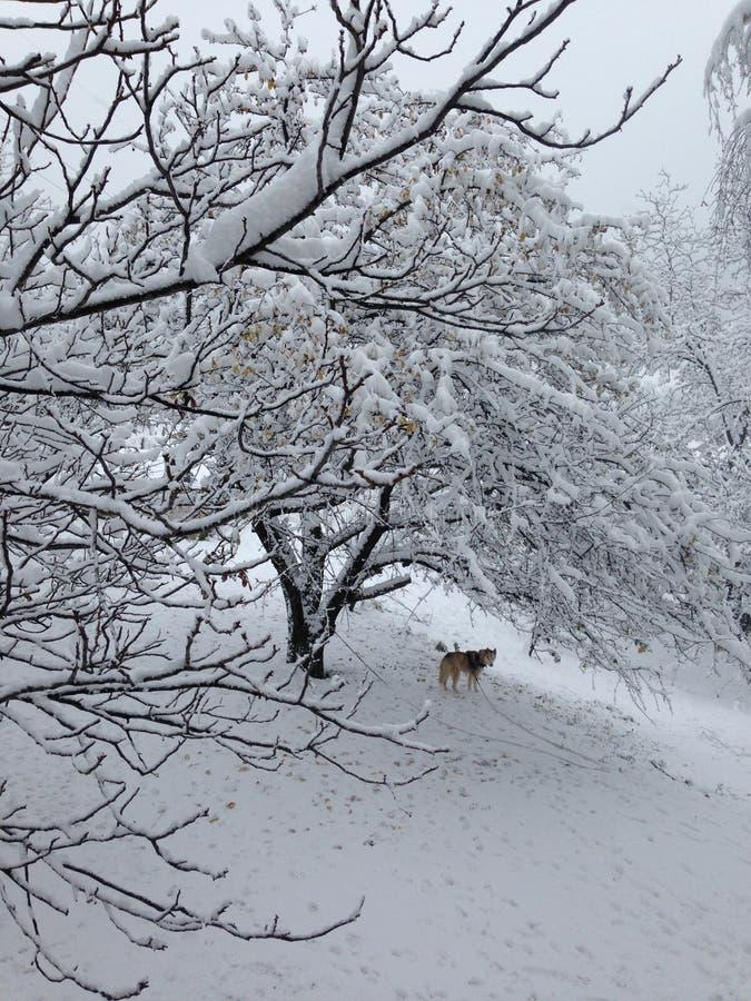 γεροδεμένο χιόνι στοκ φωτογραφία με δικαίωμα ελεύθερης χρήσης