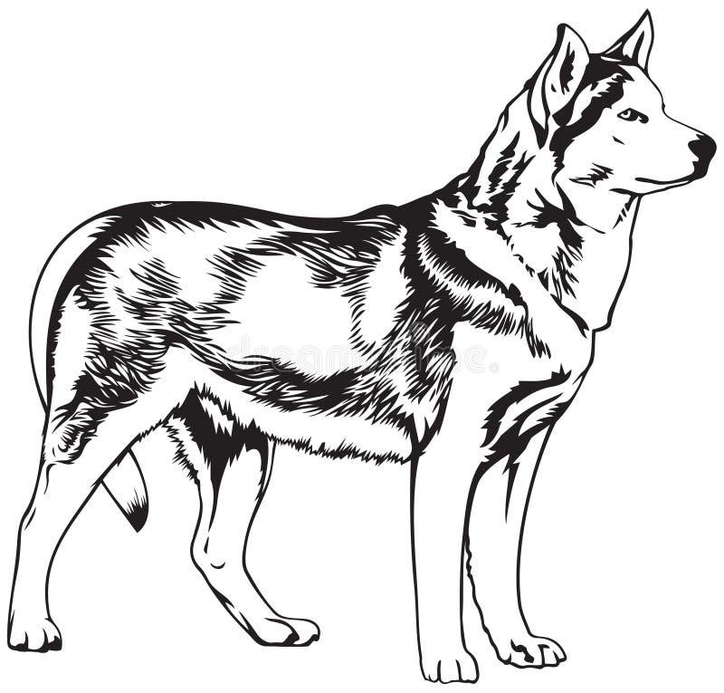 Γεροδεμένη διανυσματική απεικόνιση φυλής σκυλιών απεικόνιση αποθεμάτων