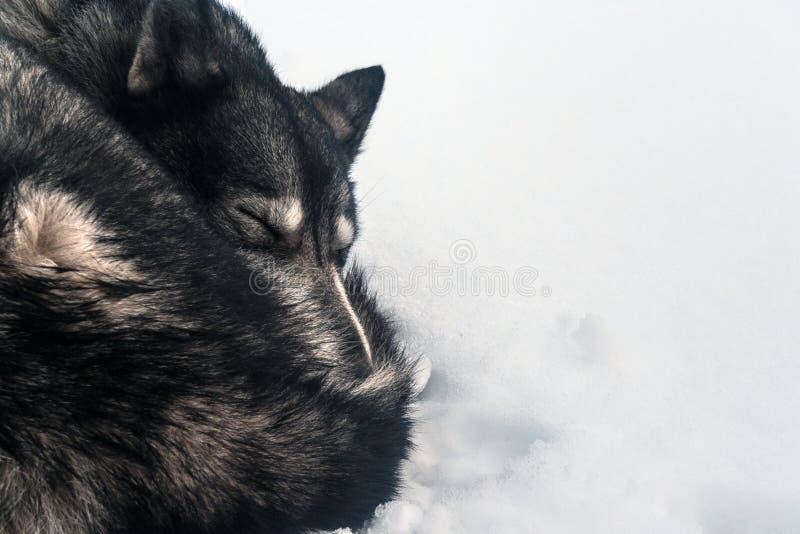 Γεροδεμένος ύπνος στο χιόνι στοκ φωτογραφία