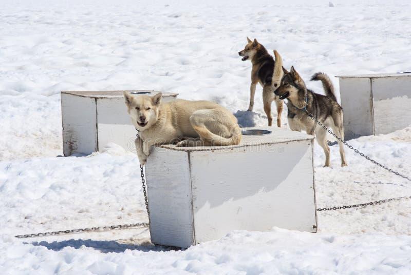 Γεροδεμένο σκυλί πάνω από το ρείθρο στοκ φωτογραφίες με δικαίωμα ελεύθερης χρήσης
