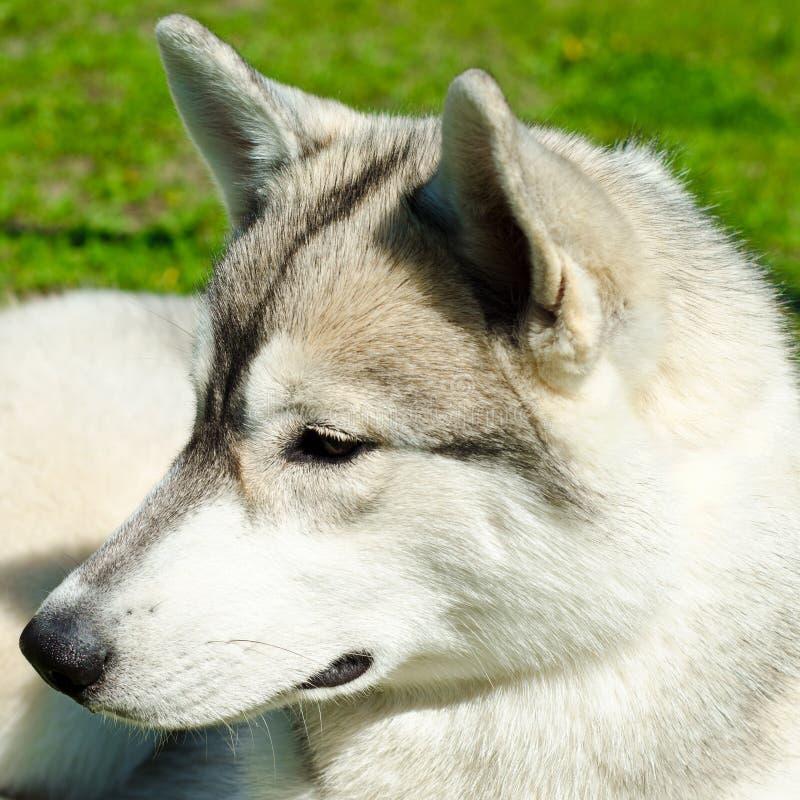 Γεροδεμένο σκυλί στοκ εικόνα με δικαίωμα ελεύθερης χρήσης