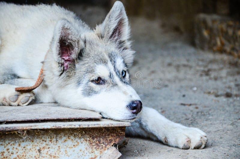 Γεροδεμένο σκυλί στοκ εικόνες με δικαίωμα ελεύθερης χρήσης