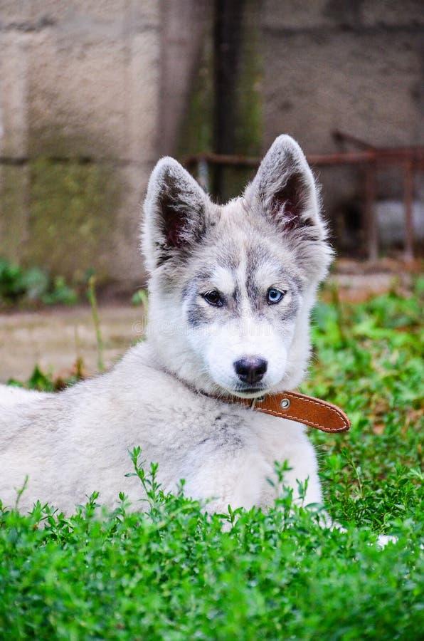 Γεροδεμένο σκυλί στοκ εικόνες