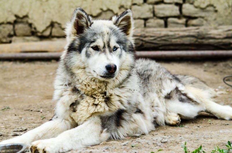Γεροδεμένο σκυλί στοκ φωτογραφία