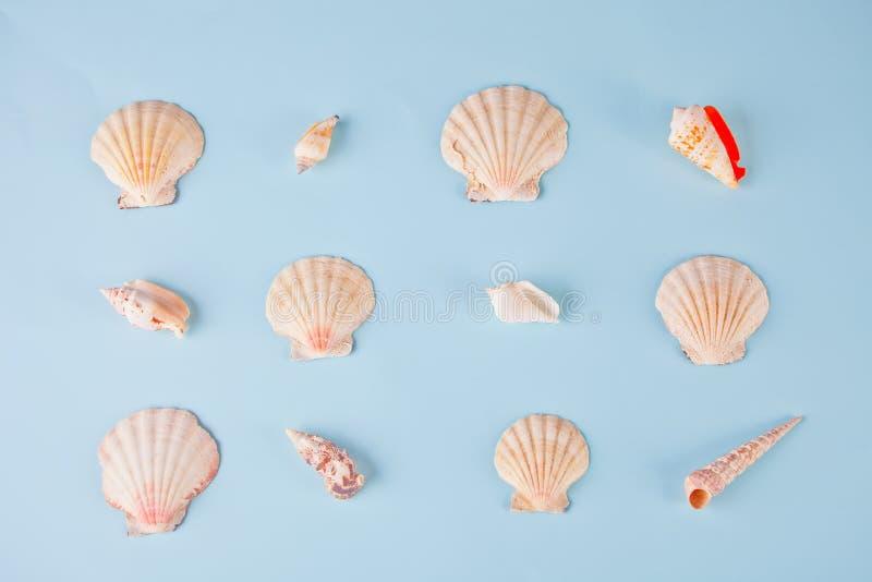 Γεωμετρικό σχέδιο από τις σειρές των θαλασσινών κοχυλιών των διαφορετικών μορφών και των χρωμάτων στο μπλε υπόβαθρο Κομψό μινιμαλ στοκ φωτογραφία με δικαίωμα ελεύθερης χρήσης