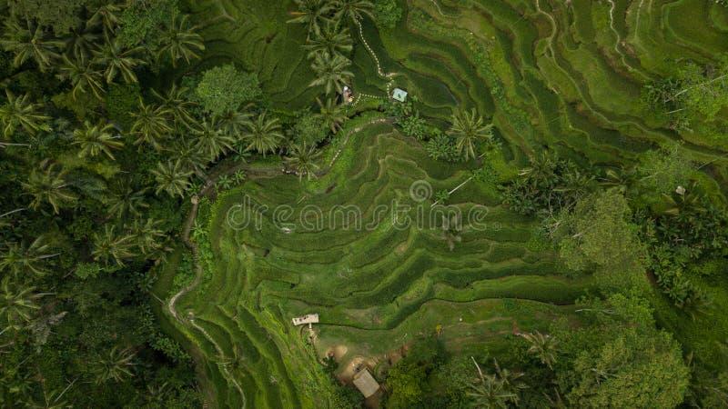 Γεωμετρικό σχέδιο στους τομείς ρυζιού στο Μπαλί, Ινδονησία στοκ εικόνα