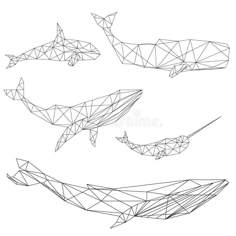 Γεωμετρικό σύνολο φαλαινών ελεύθερη απεικόνιση δικαιώματος