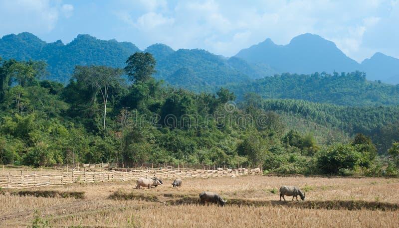Γεωργία στην Ασία Άγρια δάσος, βουνά και ζώα αγροκτημάτων στοκ φωτογραφία