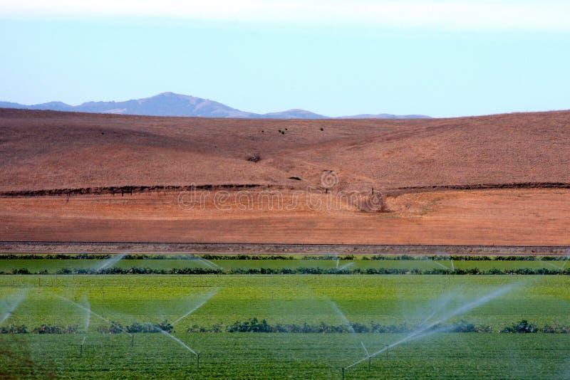 γεωργία στοκ εικόνες