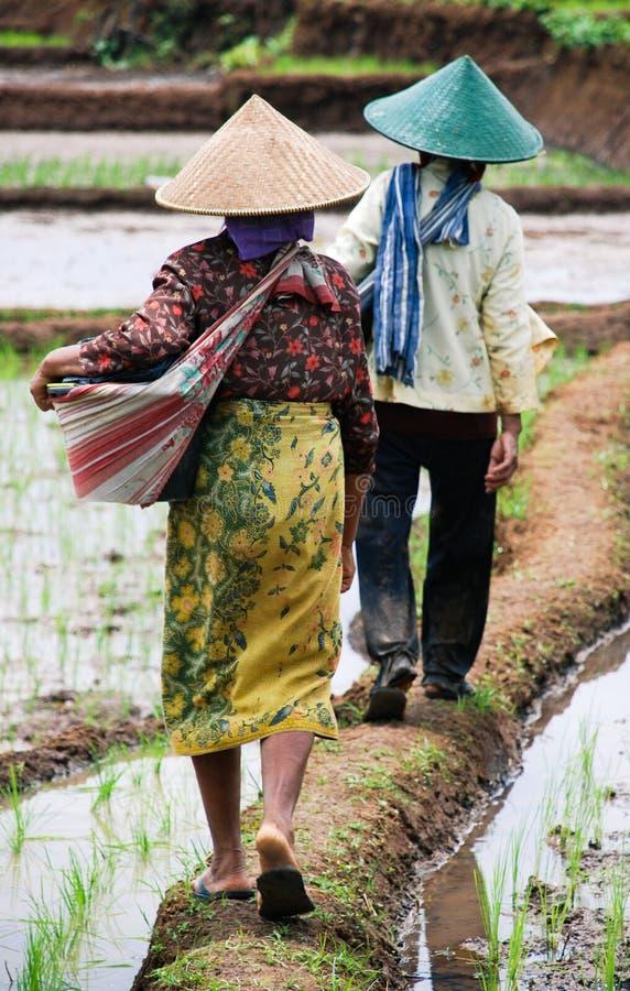 Download γεωργία εκδοτική εικόνα. εικόνα από γεωργίας, αγρόκτημα - 13181440