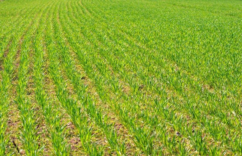 γεωργία στοκ φωτογραφίες με δικαίωμα ελεύθερης χρήσης