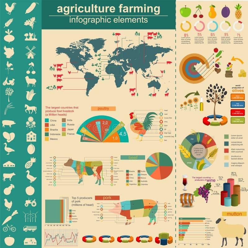 Γεωργία, infographics κτηνοτροφικής παραγωγής, διανυσματική illustrationstry γραφική παράσταση πληροφοριών απεικόνιση αποθεμάτων