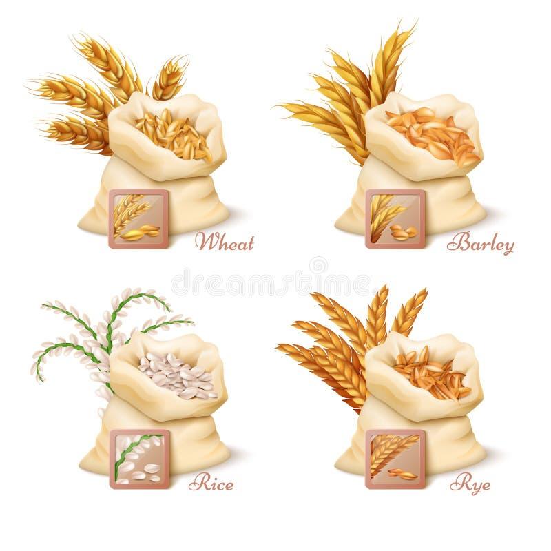 Γεωργικά δημητριακά - διανυσματικό σύνολο σίτου, κριθαριού, βρωμών και ρυζιού διανυσματική απεικόνιση