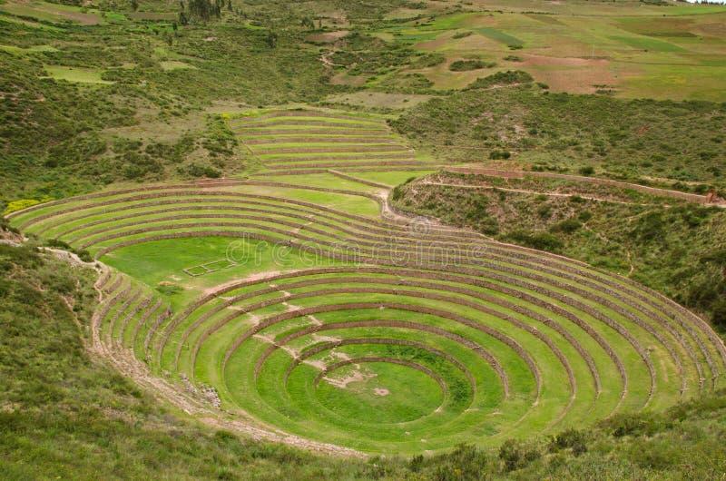 γεωργικά πεζούλια του Περού inca moray στοκ εικόνες
