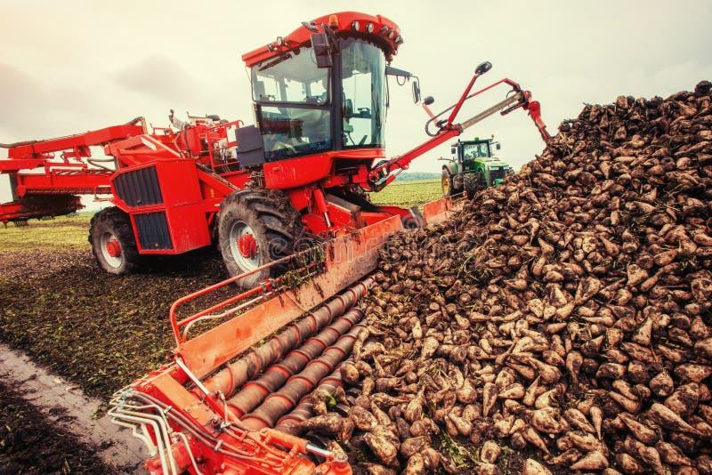 Γεωργικά σακχαρότευτλα συγκομιδής οχημάτων Ουκρανία Ευρώπη στοκ εικόνα με δικαίωμα ελεύθερης χρήσης
