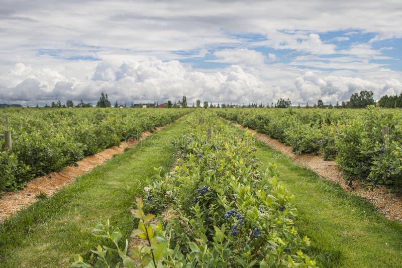 Γεωργική γη στοκ φωτογραφία με δικαίωμα ελεύθερης χρήσης