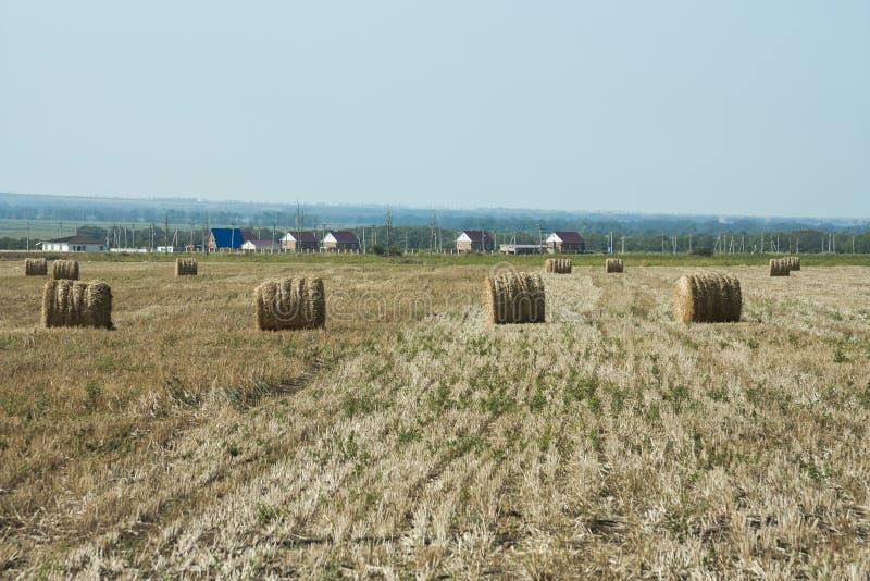 Γεωργική εργασία για την κοπή χόρτου στοκ εικόνες